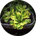 Продажа растений для дома и дачи