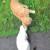 Бесплатно маленькие котятки - Изображение 4