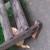 Котята бесплатно - Изображение 1