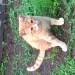 Котята бесплатно