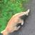 Котята бесплатно - Изображение 2
