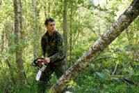 Расчистка участка от деревьев и кустарника