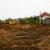 Расчистка участка от деревьев и кустарника - Изображение 4