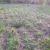 Расчистка участка от деревьев и кустарника - Изображение 2